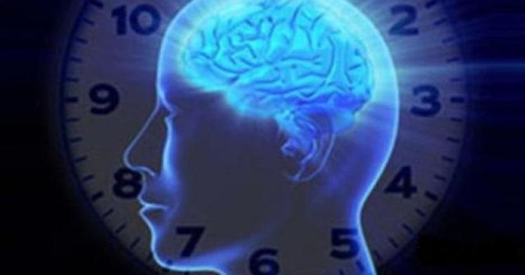 работоспособность мозга